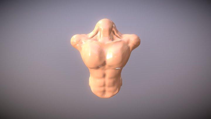 muscle 3D Model