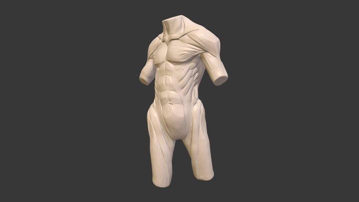 Torso HD 3D Model