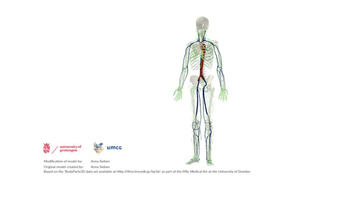 Lymphatic System: an overview 3D Model
