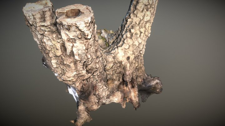 Tree is a Crowd 3D Model