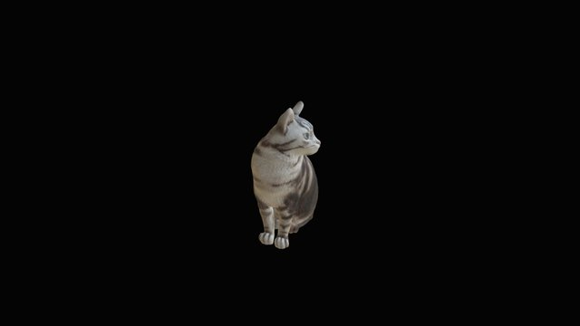 Cat  short hair 3D Model
