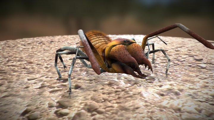 Sun Spider 3D Model