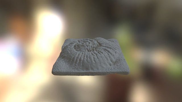 DL Beta Challence C2 Ammonite 3D Model