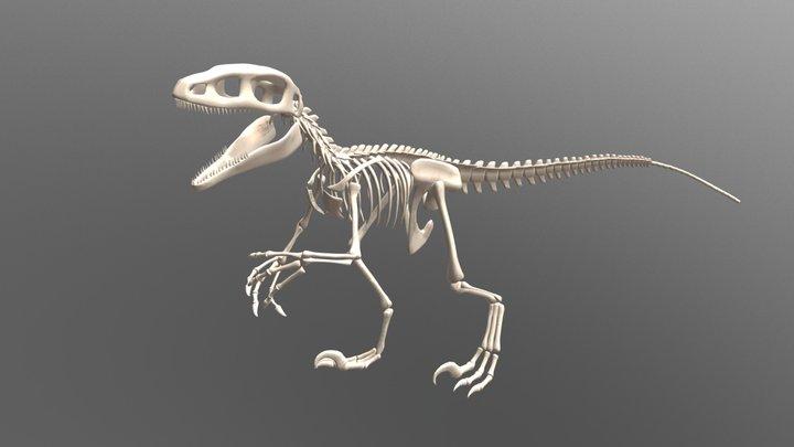Carnivore Dinosaur Skeleton 3D Model
