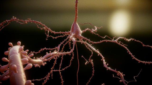 AP Neuron Test V5 3D Model