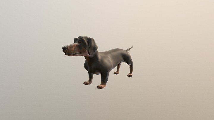 Dog Dachshund -Tacskó 3D Model