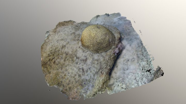0143 - Coral colony 3D Model