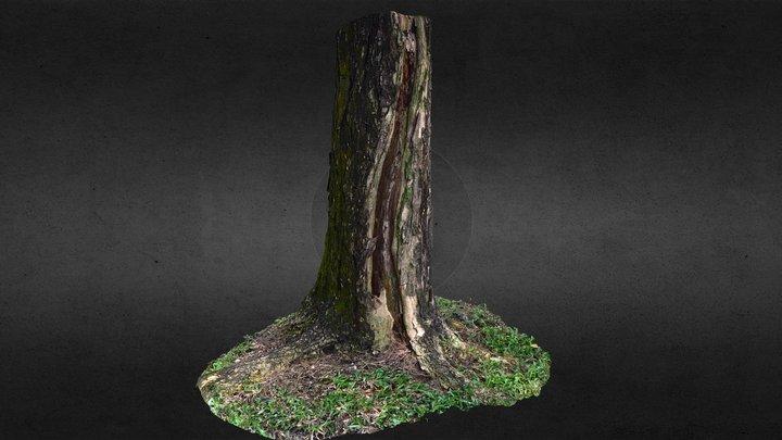 Tree Trunk (practice raw scan) 3D Model