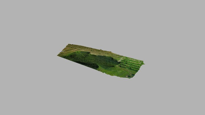 Boyer Nurseries Area 1 3D Model