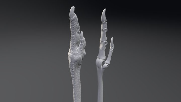 Emu Foot - CT data flesh and bones 3D Model