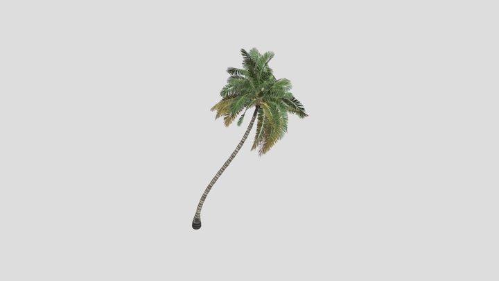 palm dan 3D Model