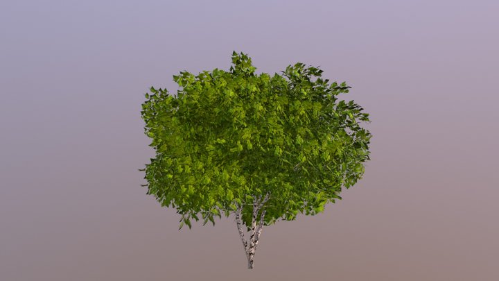 Árbol/ Tree 3D Model