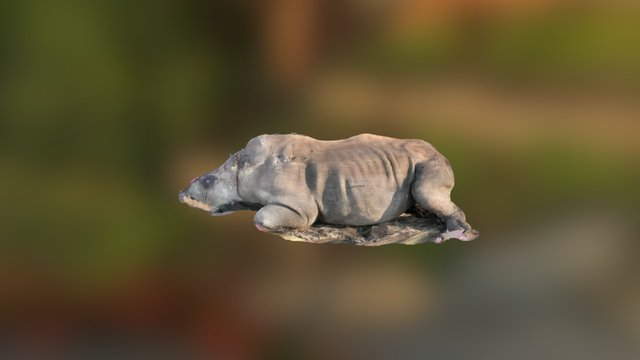 Graphic image - Rhino killed for horn 3D Model
