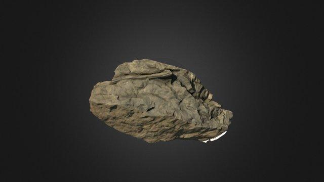 Equisetum fossil 3D Model