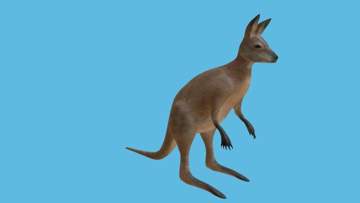 Kangaroo Mesh 3D Model
