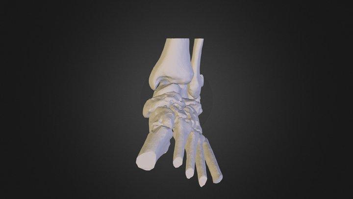 meu pe esquerdo4 3D Model