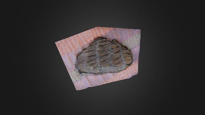 Patterned pottery shard 3D Model