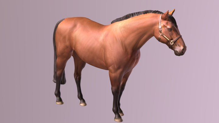 1901004- Gussie- Horse - Thoroughbred 3D Model