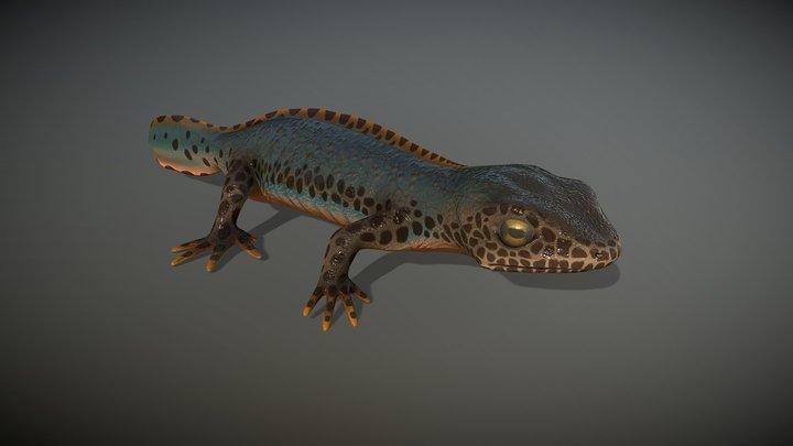 Alpine Newt 3D Model
