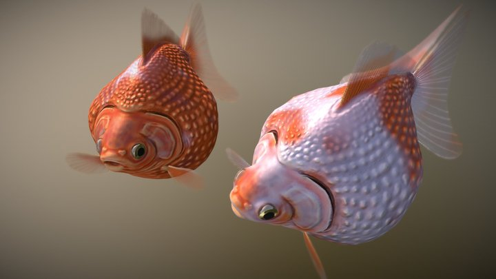 Pearlscale goldfish 3D Model