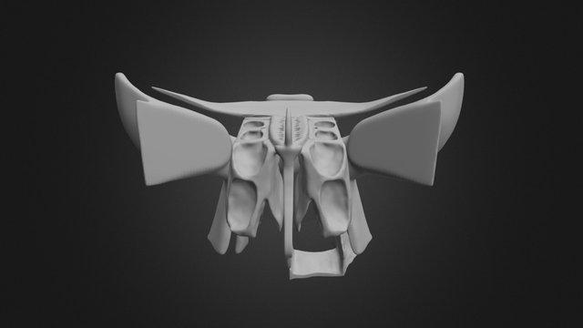 Skull Articulated 3D Model