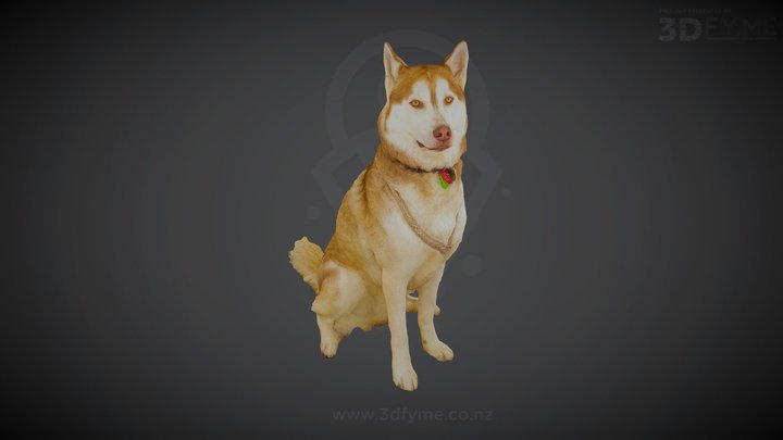 Whisky, Siberian Husky (3D-Scan, 100 pics) 3D Model