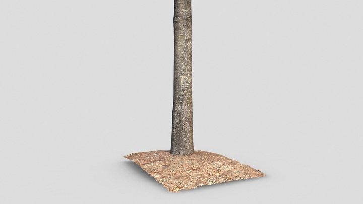 Oak Tree Trunk 3D Model