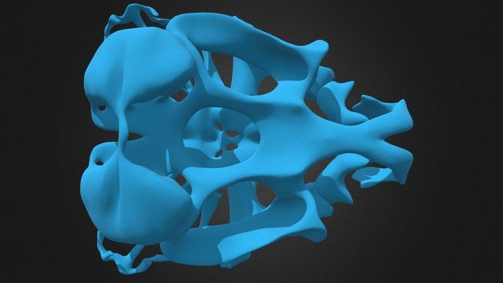 Common toad larval skull 3D Model