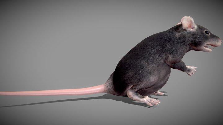 Fat Rat 3D Model