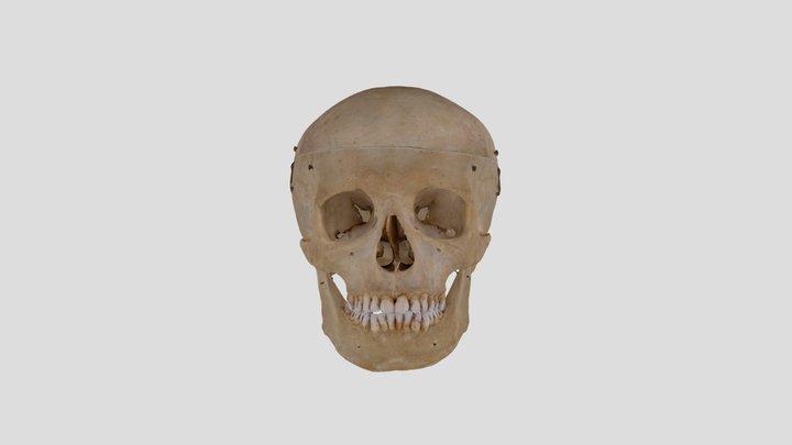 Human skull B3R7 3D Model