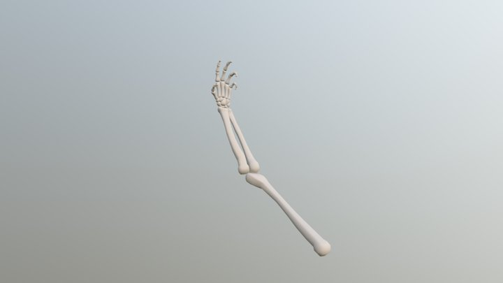 Skeleton Arm 3D Model
