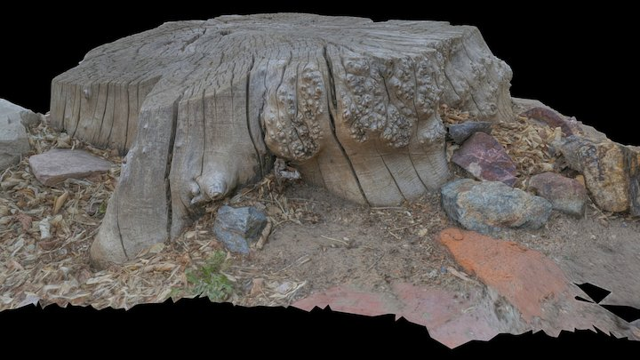 Tree Stump - Reality Capture Low Light Test 3D Model