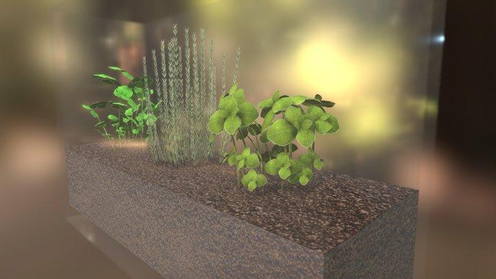 Terrarium (basil, rosemary and coriander) 3D Model