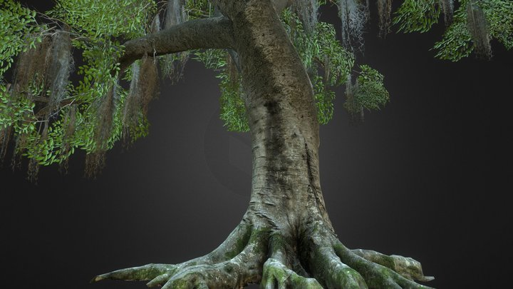 Photoscanned Beech Tree 3D Model