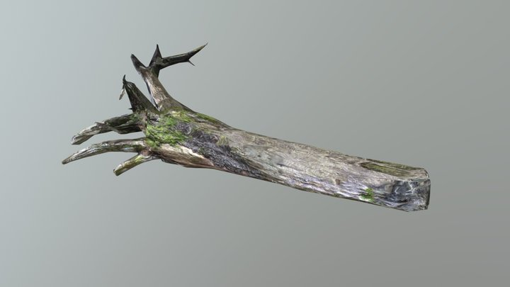 TrunkRooted2-LODs 3D Model