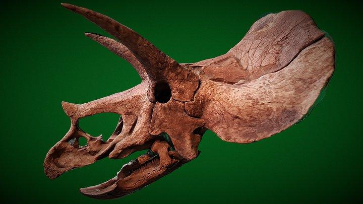 Triceratops - Cosmocaixa 3D Model