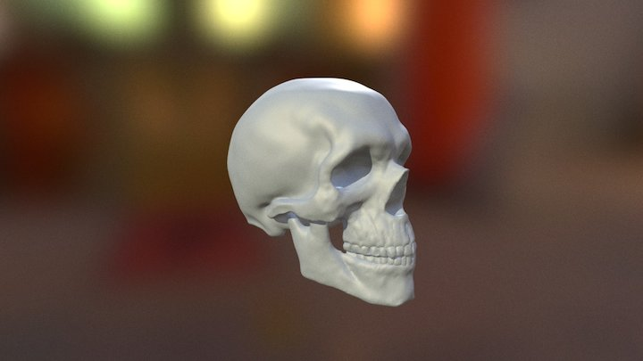 Skull Sculpt 3D Model
