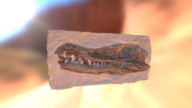 Velociraptor Skull 3D Model