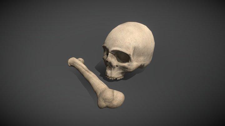 Skull and Bone 3D Model