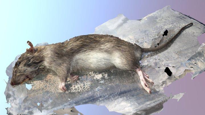 Norway Rat 3 - MeshRoom 3D Model