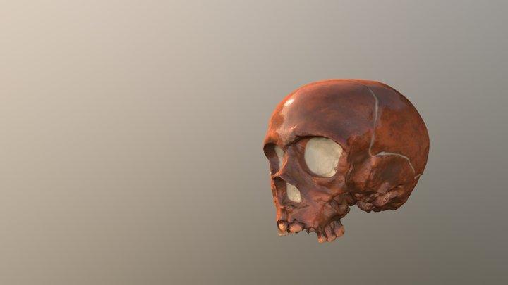 La Quina 18 juvenile cranium 3D Model
