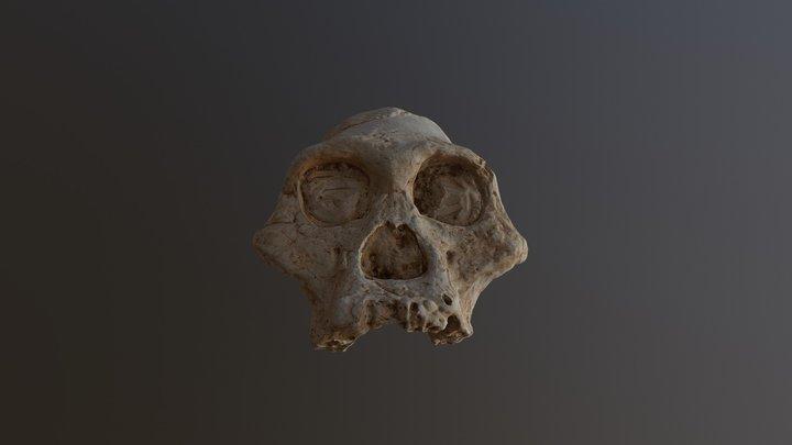 africanus 3D Model