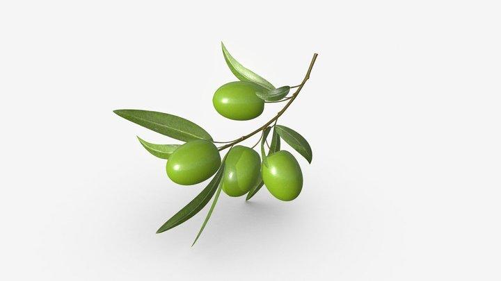 olive branch 3D Model
