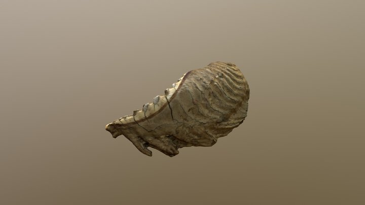 Mammoth Tooth 3D Model