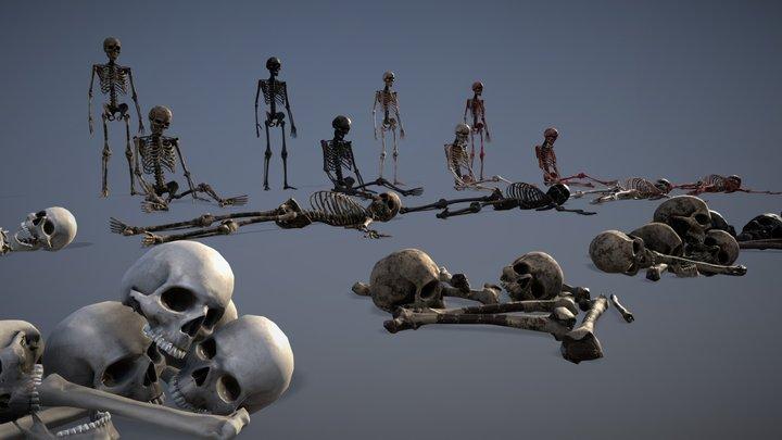 Human Bones Set 3D Model