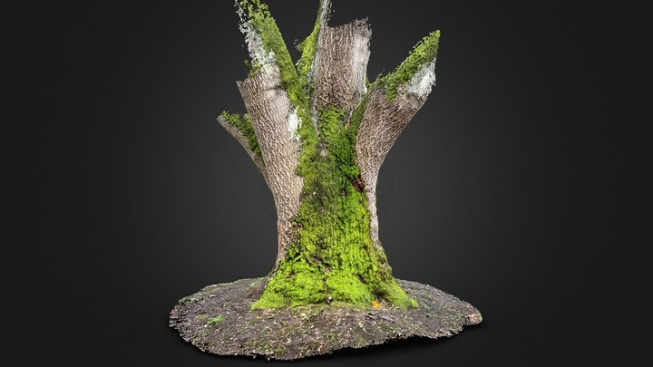 Day 7: Big Tree with Moss 3D Model