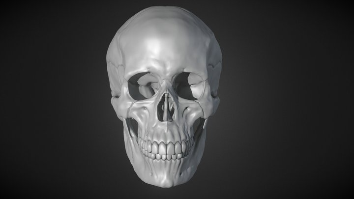 Human Female Skull 3D Model