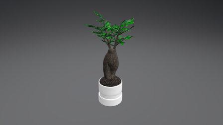 Bonsai Final 3D Model