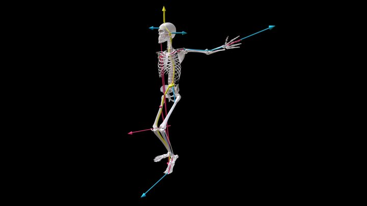 4 Act. Lines--One Leg, Chest Support Side, Rib3 3D Model