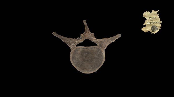 Mammoth - Lumbar vertebra 3D Model